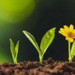 Karriere & Stellenangebote - Titelbild - Blumen die Wachsen - Entwickel Deine Fähigkeiten